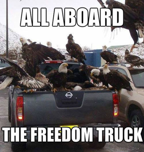 all aboard the freedom truck, meme, bald eagles in a pick up truck