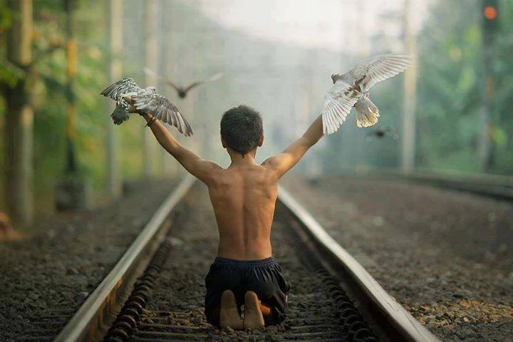 train tracks, birds, kid