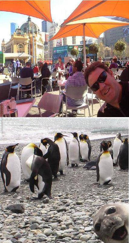 photobomb, totallylookslike, penguins, seal, father