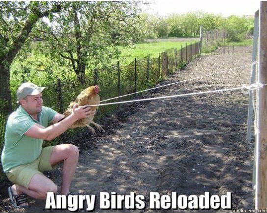 angry birds, hacked irl, chicken, slingshot, meme, reloaded