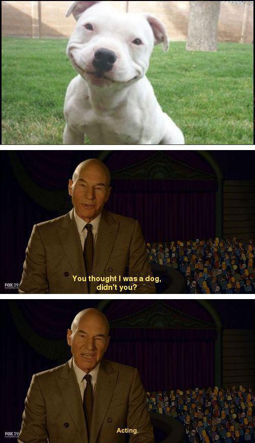 acting, dog, patrick stewart