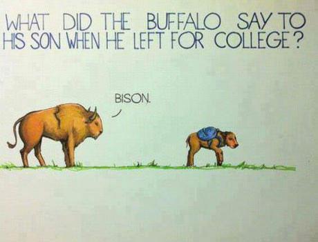 bison, joke, wordplay, pun, buffalo
