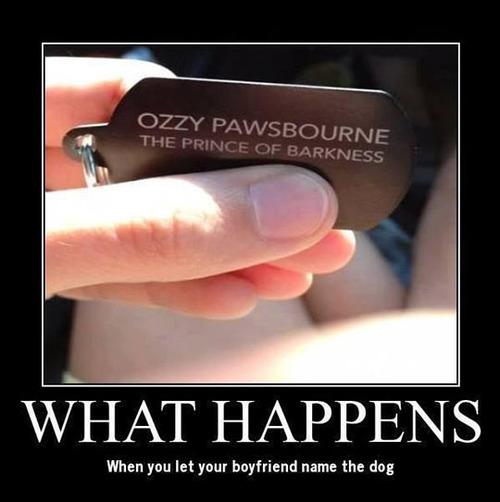 dog tag, ozzy pawsborne, wordplay, ozzy osborne, prince of darkness, barkness