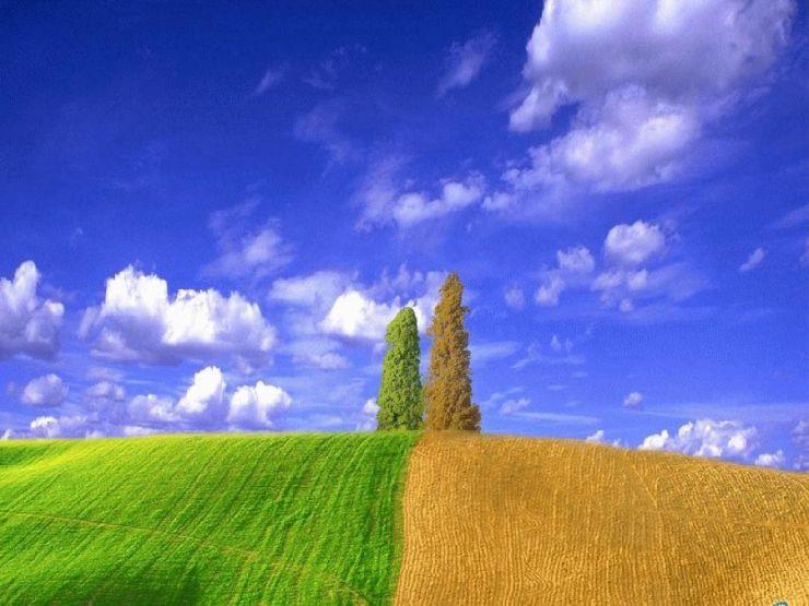 field, green, brown, tree