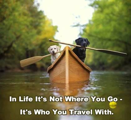 dog, paddle, boat, travel, life, company