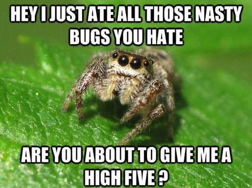 good guy spider, nasty bugs, high five, meme