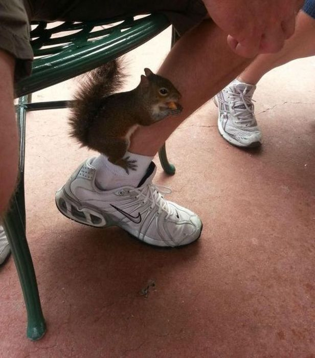 squirrel, leg, eating, wtf