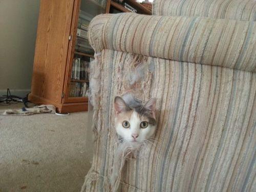 cat, head, chair, lol