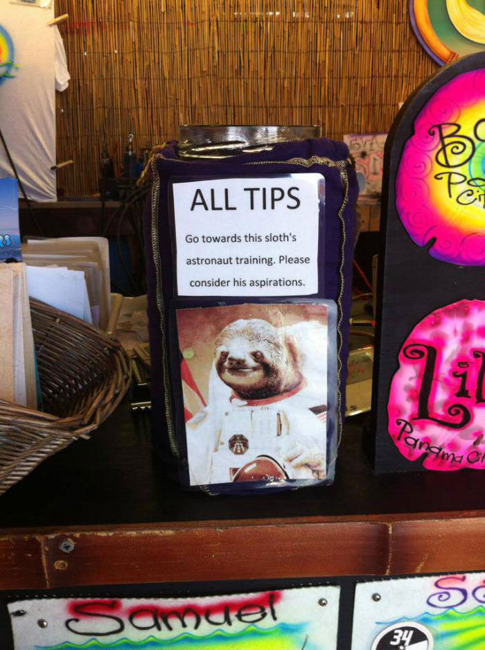 all tips go towards this sloth's astronaut training, please consider his aspirations