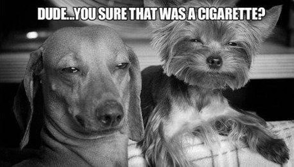 dude you sure that was a cigarette?, two dogs that looked stoned