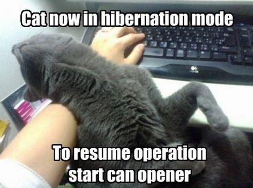cat now in hibernation mode, to resume operation start can opener, meme