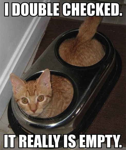 i double checked it really is empty, cat in double opening food bowl