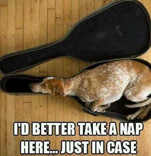 I'd better take a nap here, just in case, dog sleeping in a guitar case, meme