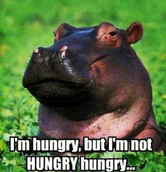 meme, hungry, hippo