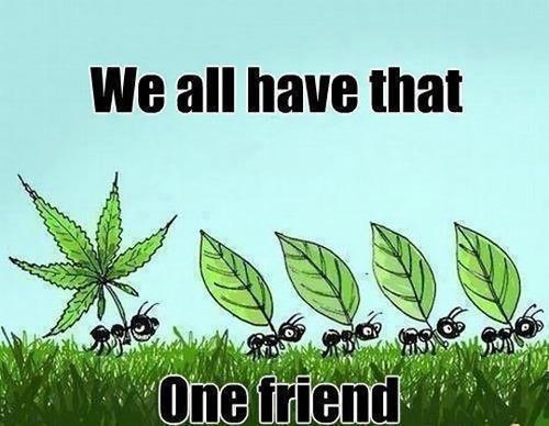 ants, leaf, friend, marijuana