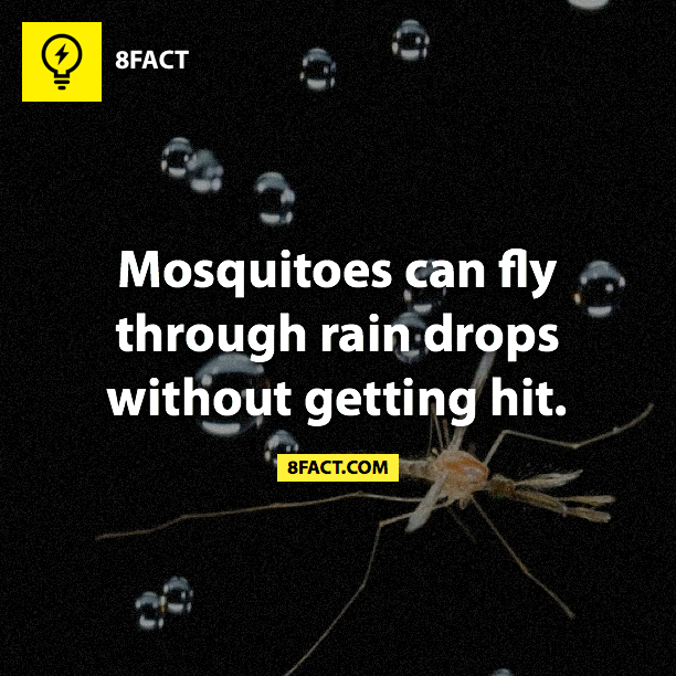 dyk, fact, rain, mosquitoes