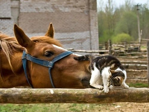 horse, cat, wtf