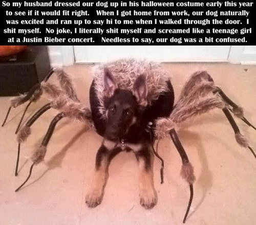 spider costume, dog, troll, prank, scared, halloween
