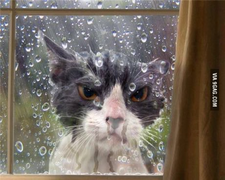 angry looking cat stuck outside in the rain