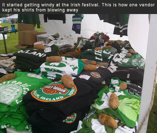 it started getting windy at the irish festival, this is how one vendor kept his shirts form blowing away, potatoes
