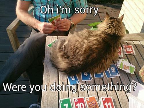 cat, fucks given, card game, meme, troll
