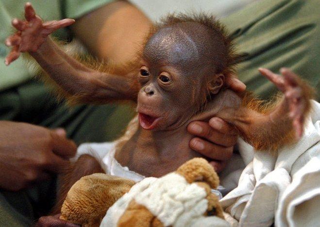 baby monkey, primate