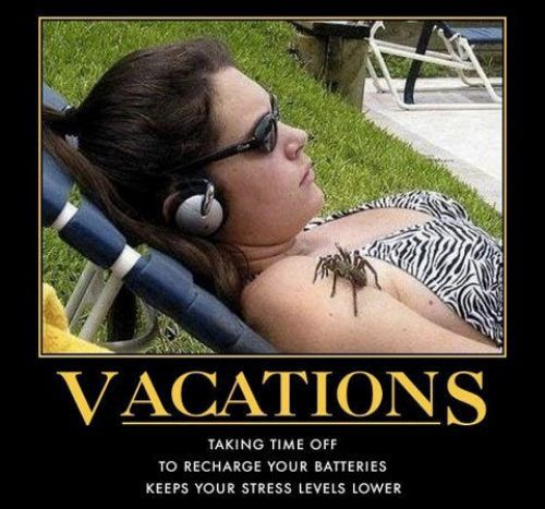 motivation, vacation, spider