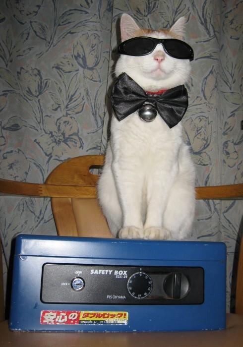 cool cat, bow tie, wtf, lol, sun glasses