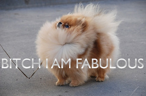 dog, fabulous, bitch