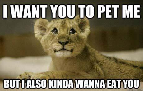 I want you to pet me but I also kinda wanna eat you, meme