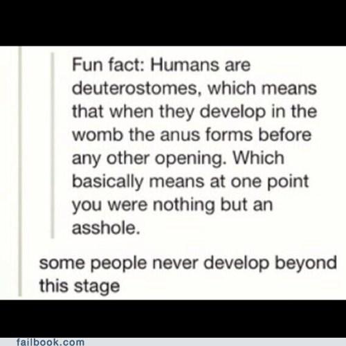 human, deuterostomes, asshole, anus, joke