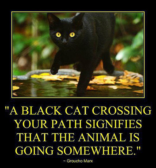a black cat crossing your path signifies that the animal is going somewhere, groucho marx