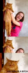 cat, eyes, son of a bitch, meme