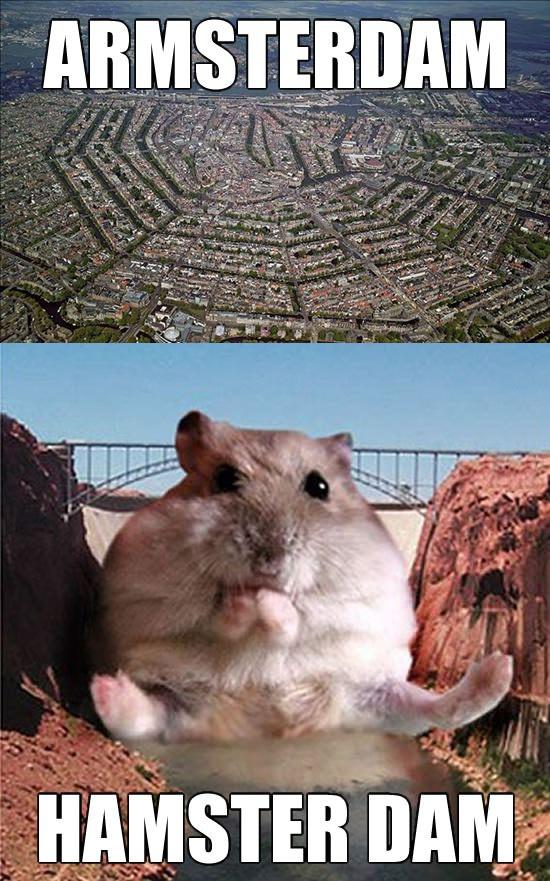 amsterdam, hamster dam, meme, wordplay