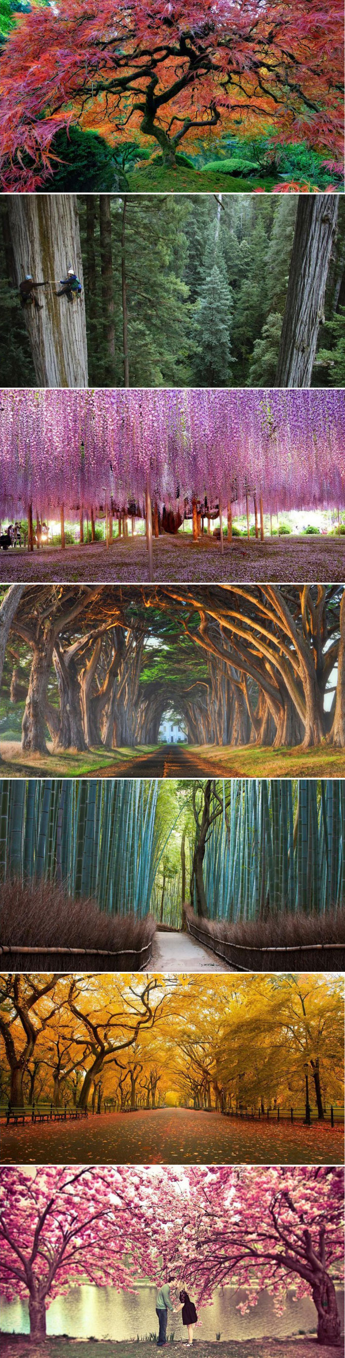 trees, nature, compilation, scenery, beautiful
