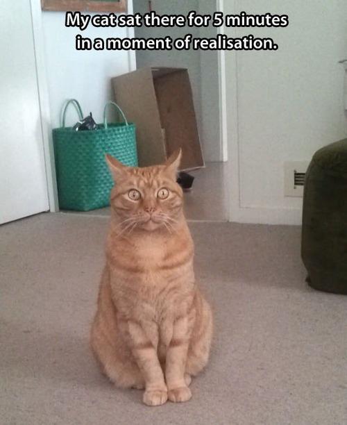 cat, revelation, story