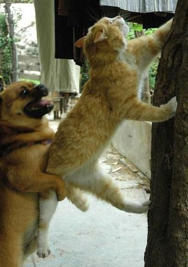 cat trying to escape humping dog