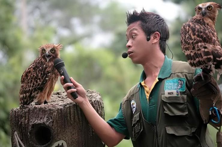 bird, microphone, talk, speak