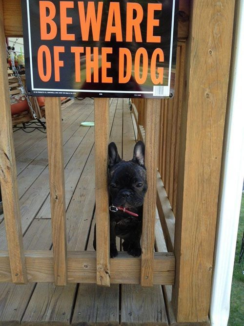 beware of the dog, puppy, cute, sign