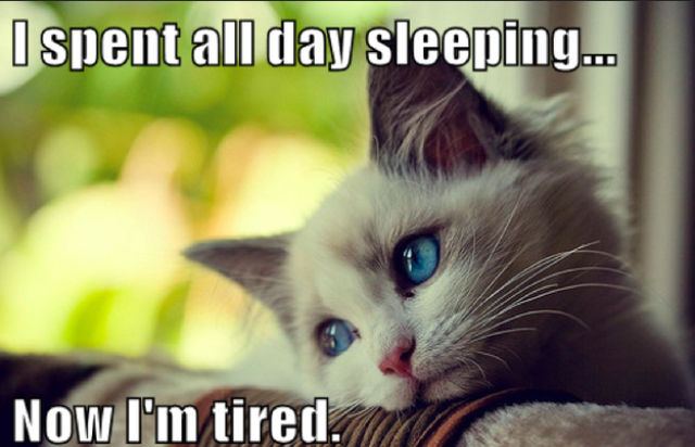 meme, cat, first world problems, sleep all day, tired