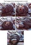 cat, 5 stages, stuck in a blanket