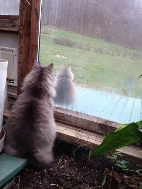 cat, identical, inside, outside
