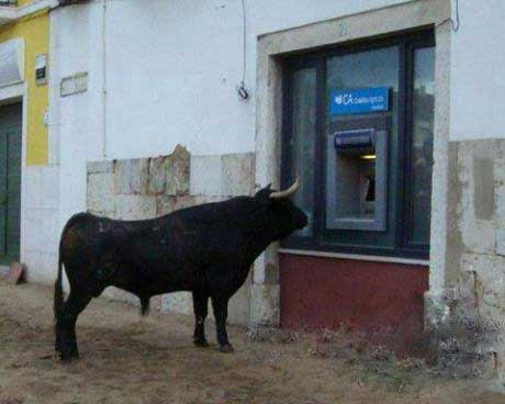bull standing in front of atm