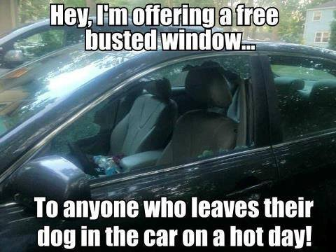meme, busted window, car, dog, hot day