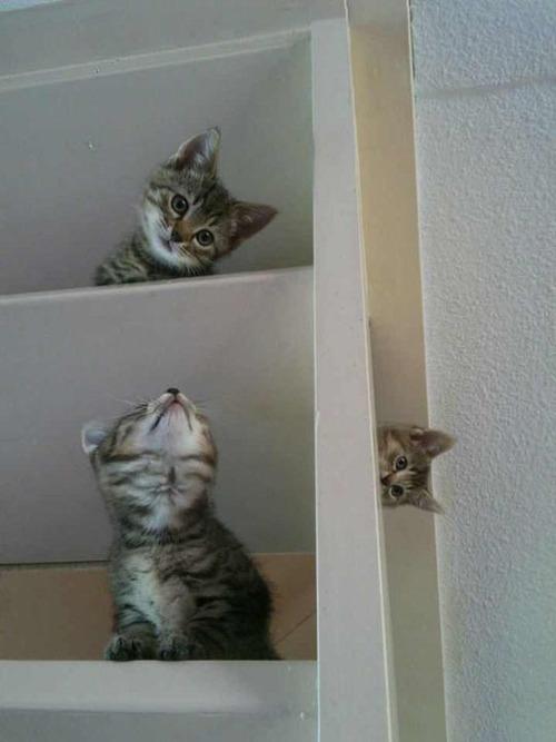 kittens, book shelf