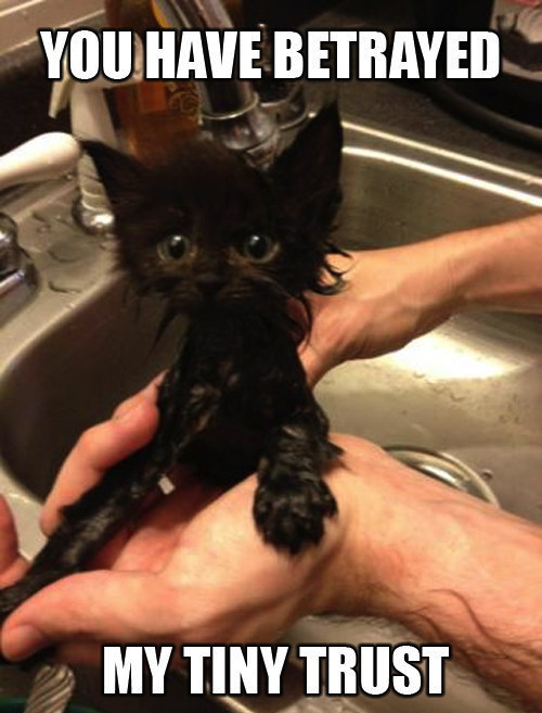 cat, water, meme, trust, betrayed
