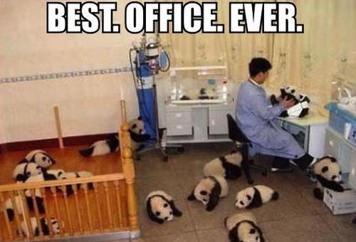 best officer ever, meme, panda bears
