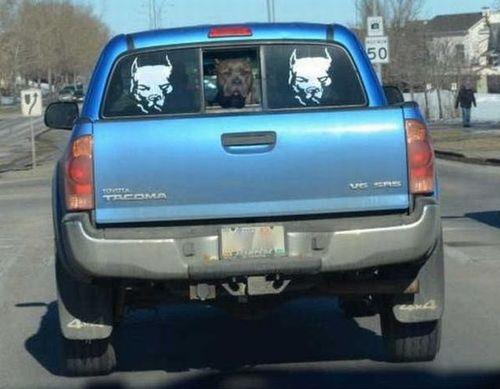 truck, sticker, decal, pitbull