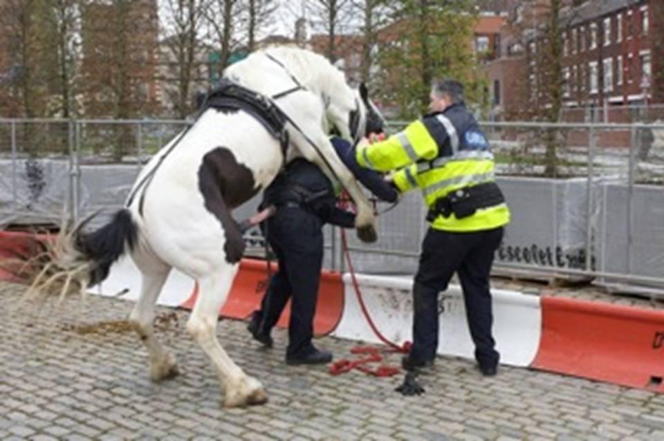joke, cop, horse, dick