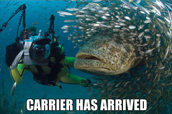 carrier has arrived, giant fish, starcraft